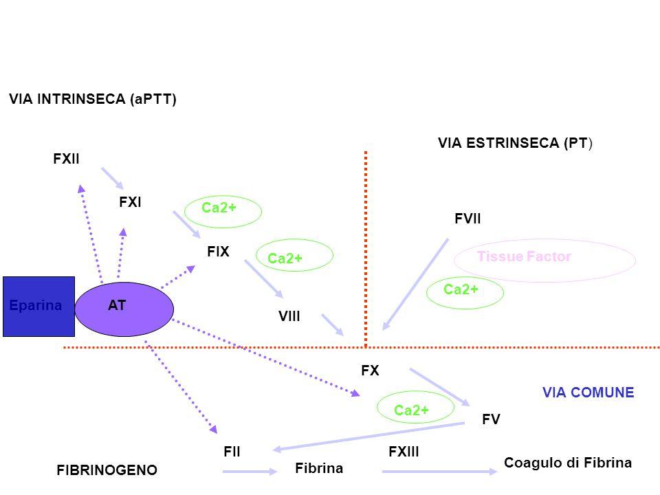 FVII Tissue Factor. Ca2+ FXII. FXI. FIX. VIII. FX. FV. Fibrina. Coagulo di Fibrina. FII. FXIII.
