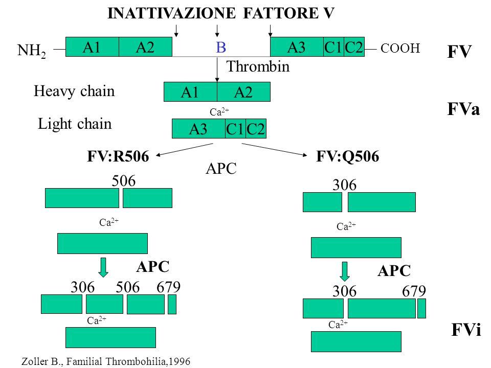 FV FVa FVi INATTIVAZIONE FATTORE V NH2 A1 A2 B A3 C1 C2 Thrombin
