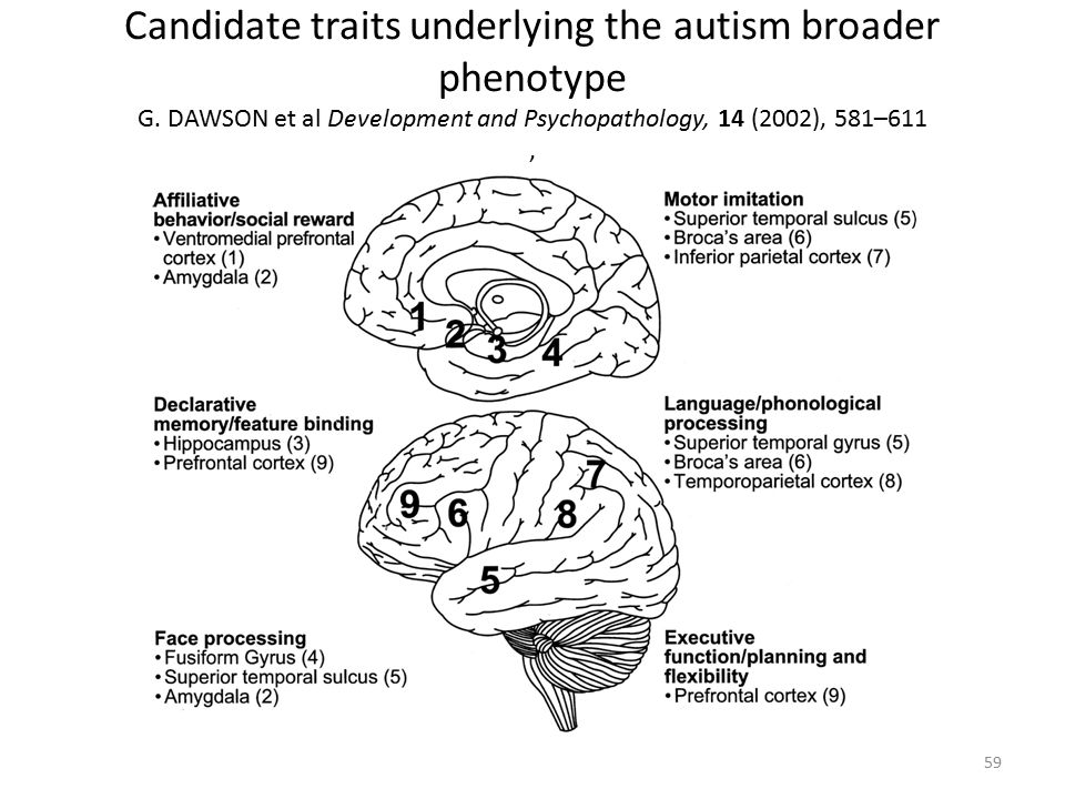 Candidate traits underlying the autism broader phenotype G