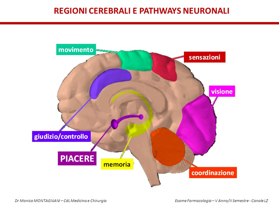 REGIONI CEREBRALI E PATHWAYS NEURONALI