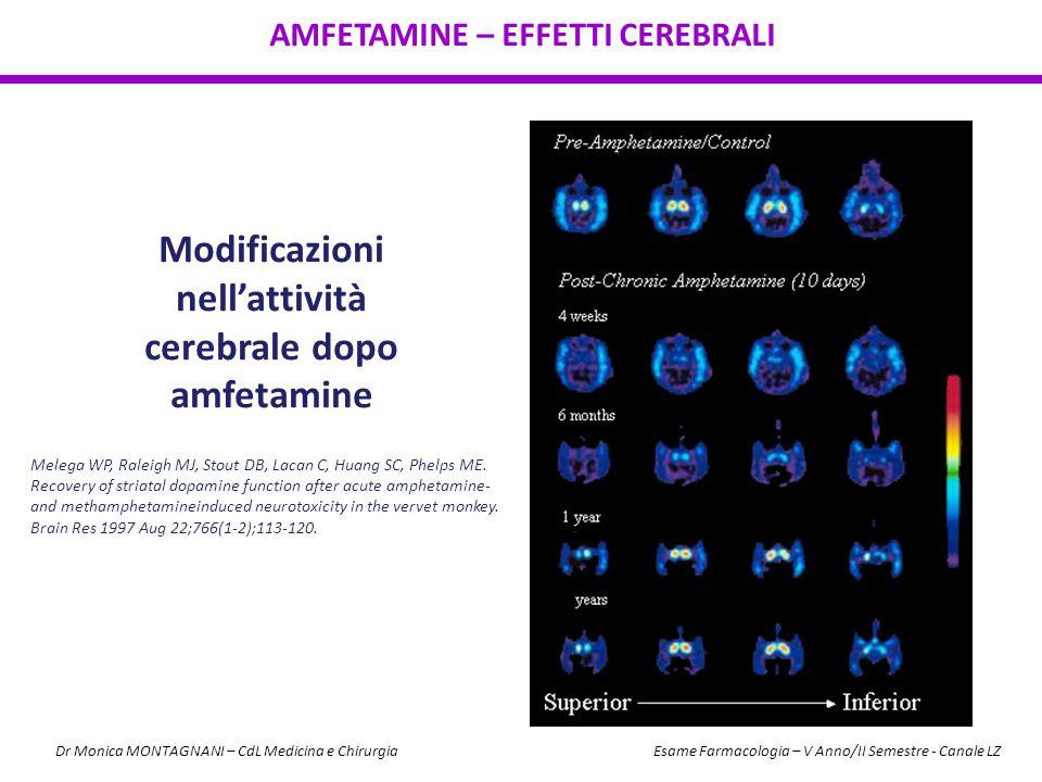 Modificazioni nell'attività cerebrale dopo amfetamine