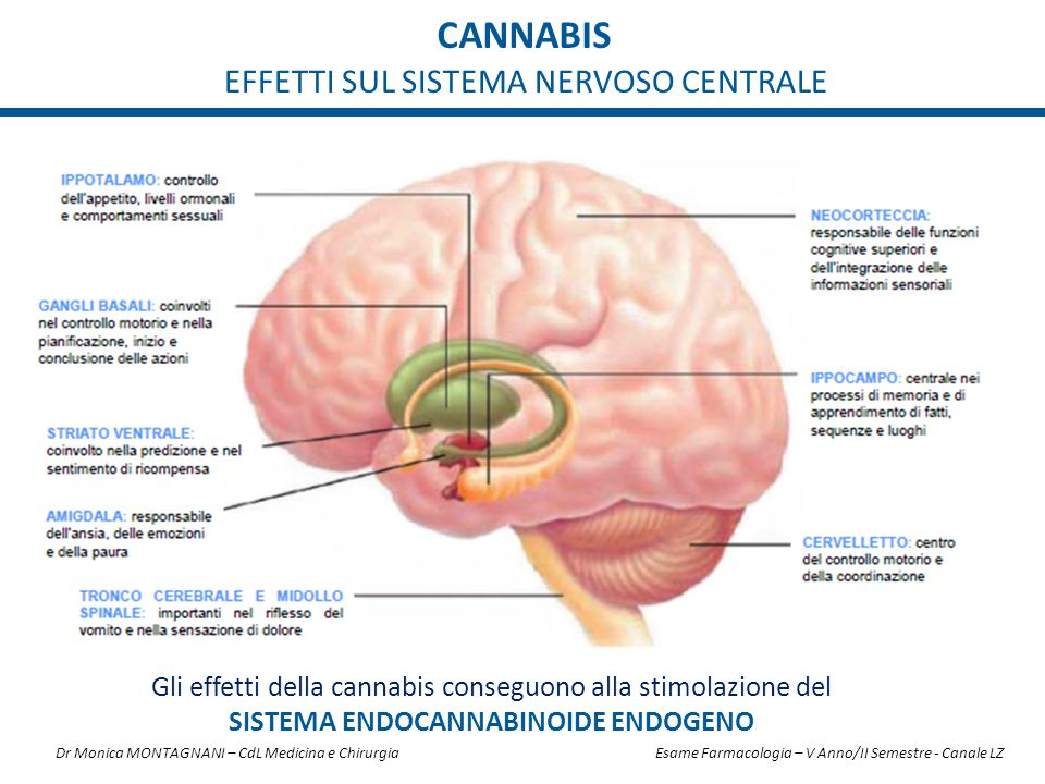 cannabis EFFETTI SUL SISTEMA NERVOSO CENTRALE