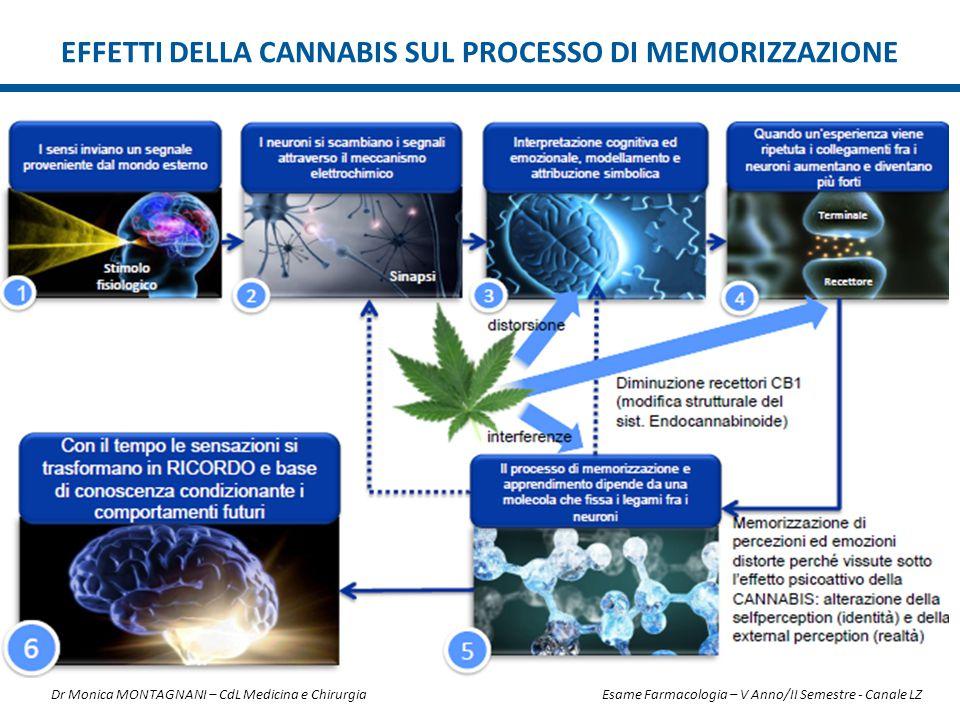 Effetti della cannabis sul processo di memorizzazione