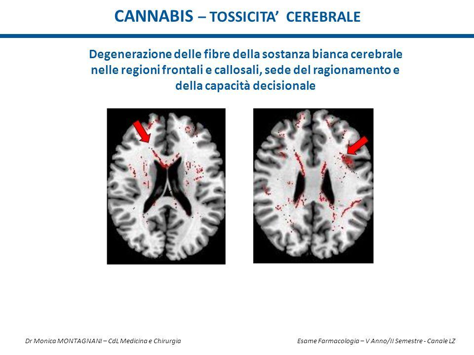 CANNABIS – Tossicita' CEREBRALE