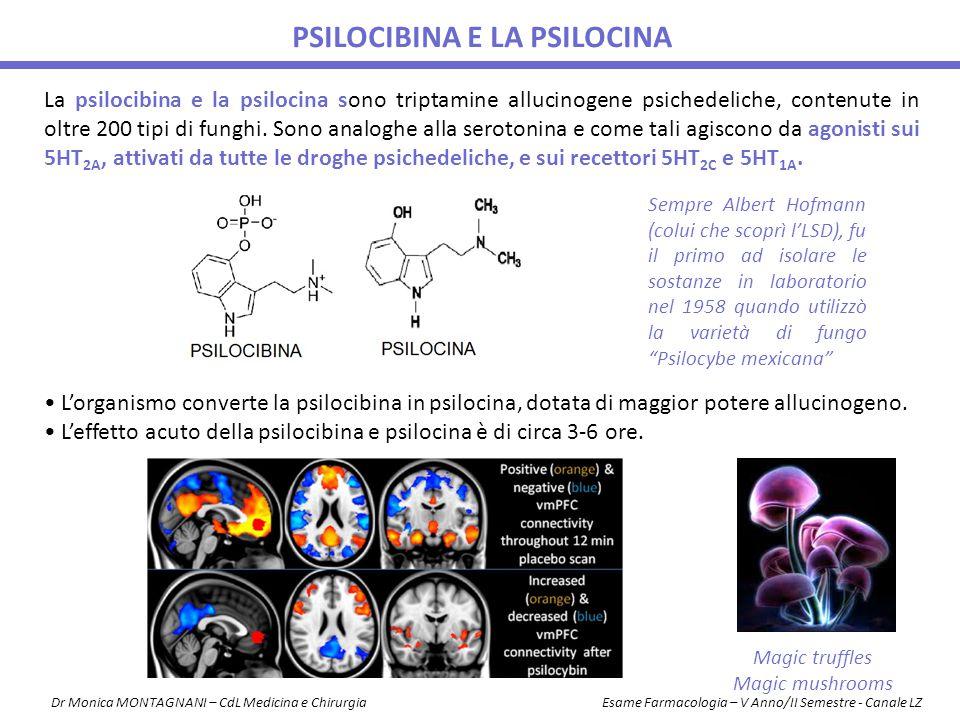 psilocibina e la psilocina