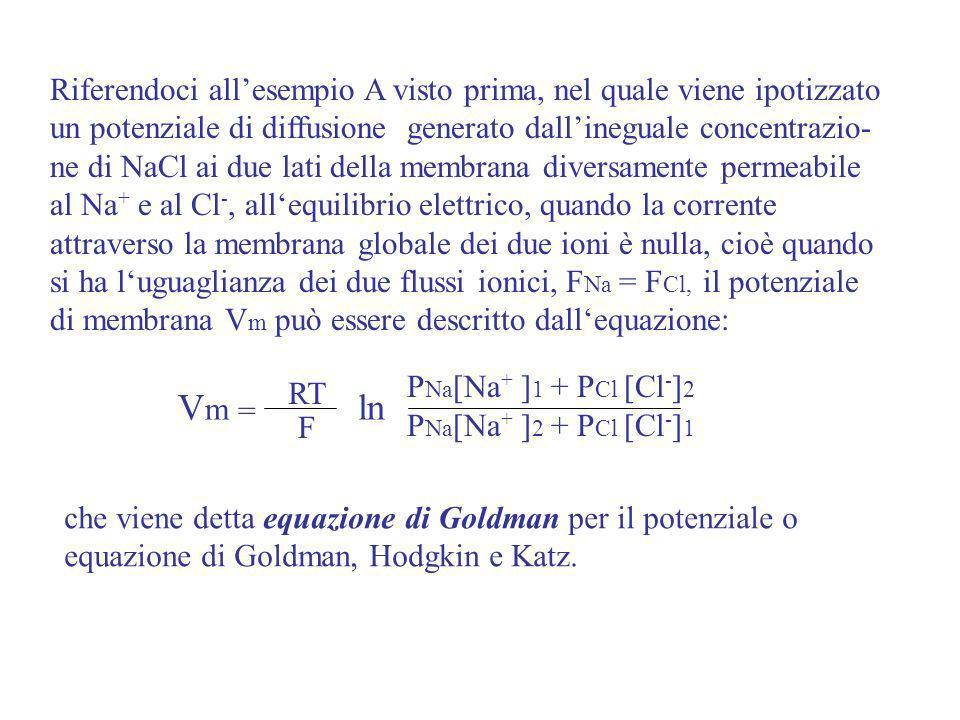 Riferendoci all'esempio A visto prima, nel quale viene ipotizzato un potenziale di diffusione generato dall'ineguale concentrazio-ne di NaCl ai due lati della membrana diversamente permeabile al Na+ e al Cl-, all'equilibrio elettrico, quando la corrente attraverso la membrana globale dei due ioni è nulla, cioè quando si ha l'uguaglianza dei due flussi ionici, FNa = FCl, il potenziale di membrana Vm può essere descritto dall'equazione: