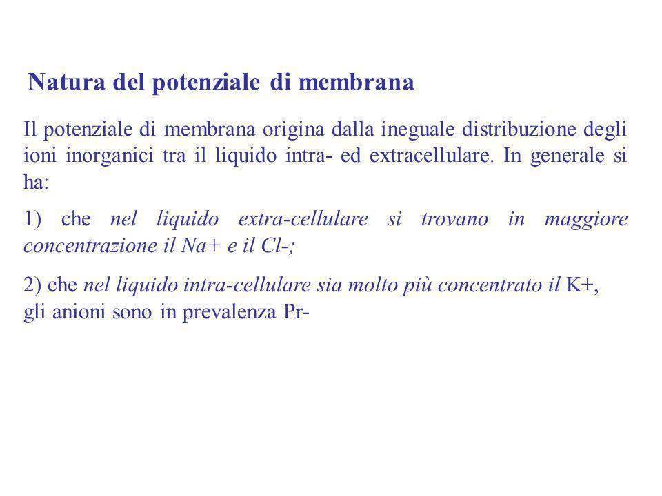 Natura del potenziale di membrana