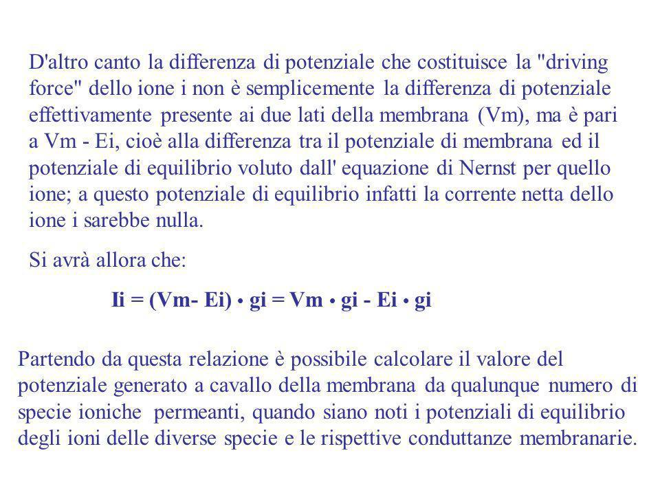 D altro canto la differenza di potenziale che costituisce la driving force dello ione i non è semplicemente la differenza di potenziale effettivamente presente ai due lati della membrana (Vm), ma è pari a Vm - Ei, cioè alla differenza tra il potenziale di membrana ed il potenziale di equilibrio voluto dall equazione di Nernst per quello ione; a questo potenziale di equilibrio infatti la corrente netta dello ione i sarebbe nulla.