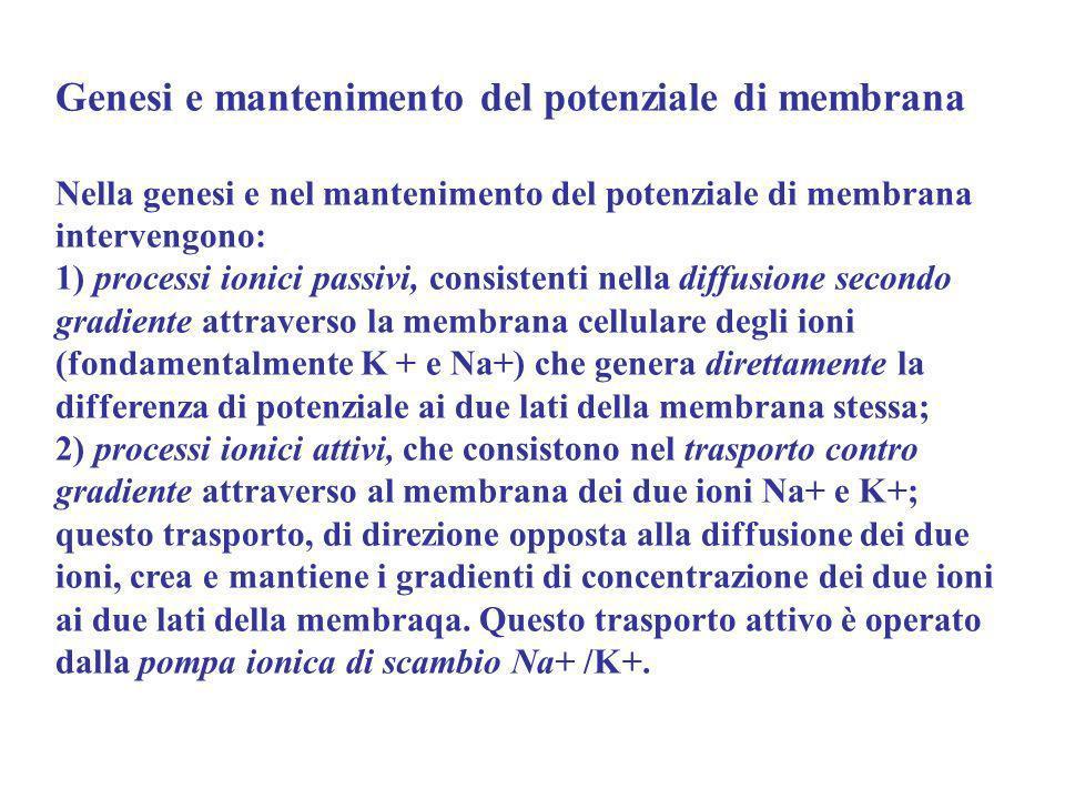 Genesi e mantenimento del potenziale di membrana