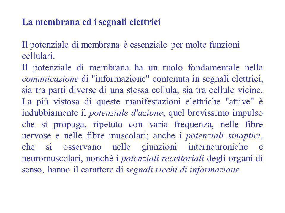 La membrana ed i segnali elettrici