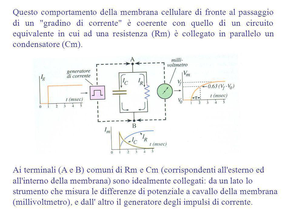 Questo comportamento della membrana cellulare di fronte al passaggio di un gradino di corrente è coerente con quello di un circuito equivalente in cui ad una resistenza (Rm) è collegato in parallelo un condensatore (Cm).