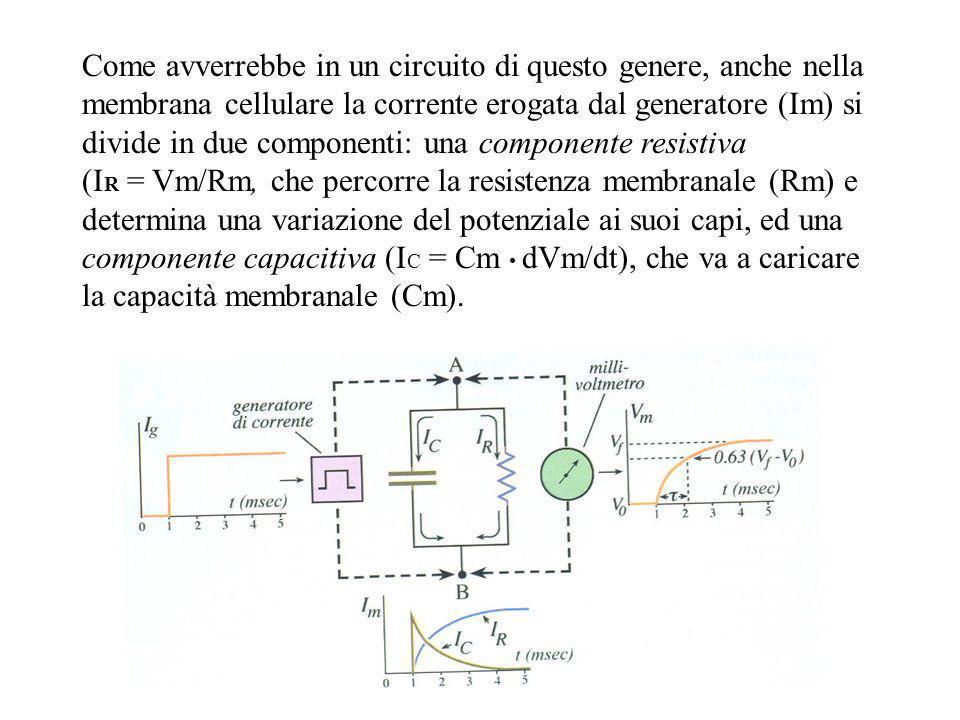Come avverrebbe in un circuito di questo genere, anche nella membrana cellulare la corrente erogata dal generatore (Im) si divide in due componenti: una componente resistiva
