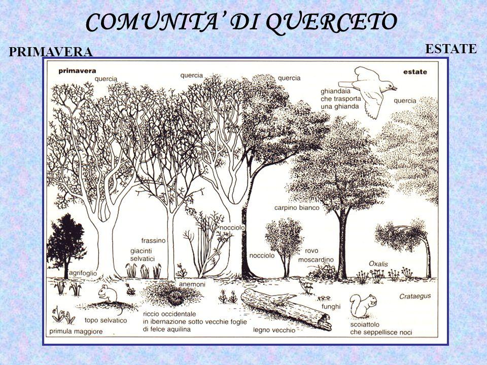 COMUNITA' DI QUERCETO PRIMAVERA ESTATE