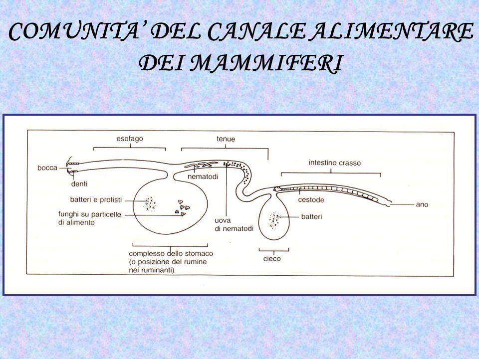 COMUNITA' DEL CANALE ALIMENTARE
