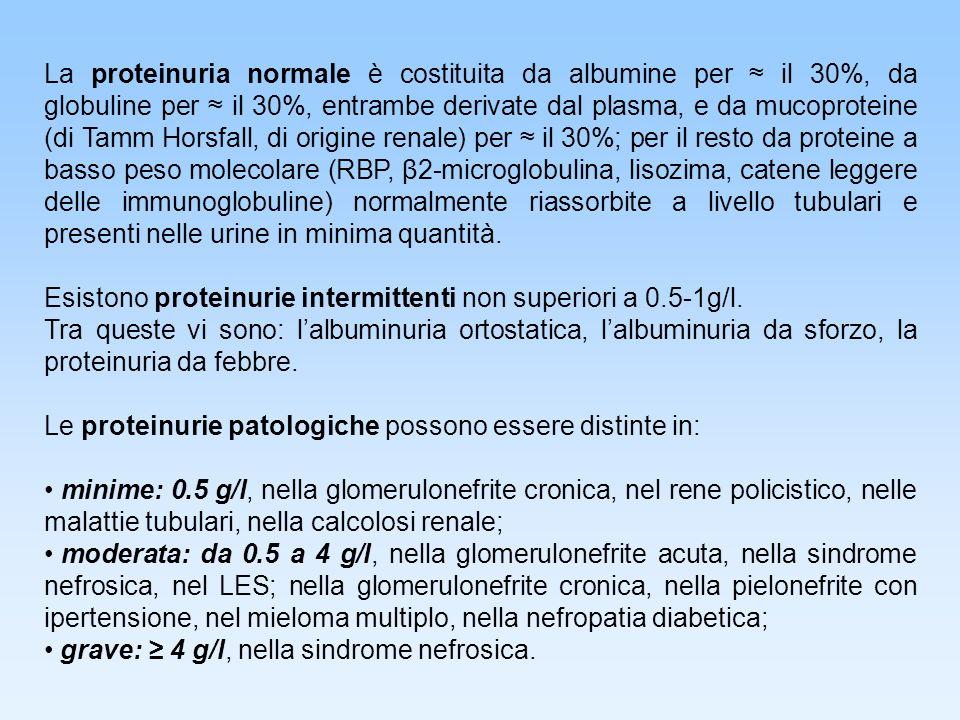 La proteinuria normale è costituita da albumine per ≈ il 30%, da globuline per ≈ il 30%, entrambe derivate dal plasma, e da mucoproteine (di Tamm Horsfall, di origine renale) per ≈ il 30%; per il resto da proteine a basso peso molecolare (RBP, β2-microglobulina, lisozima, catene leggere delle immunoglobuline) normalmente riassorbite a livello tubulari e presenti nelle urine in minima quantità.