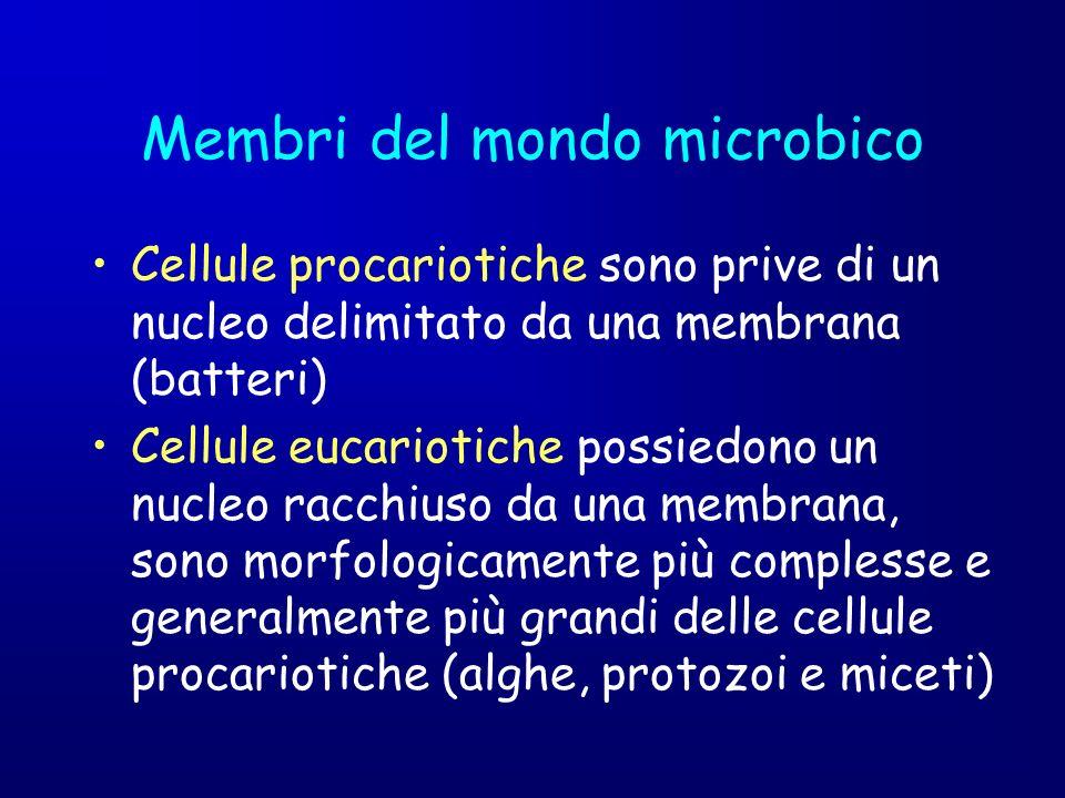 Membri del mondo microbico
