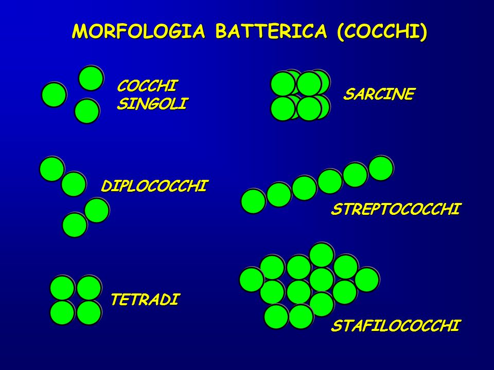 MORFOLOGIA BATTERICA (COCCHI)