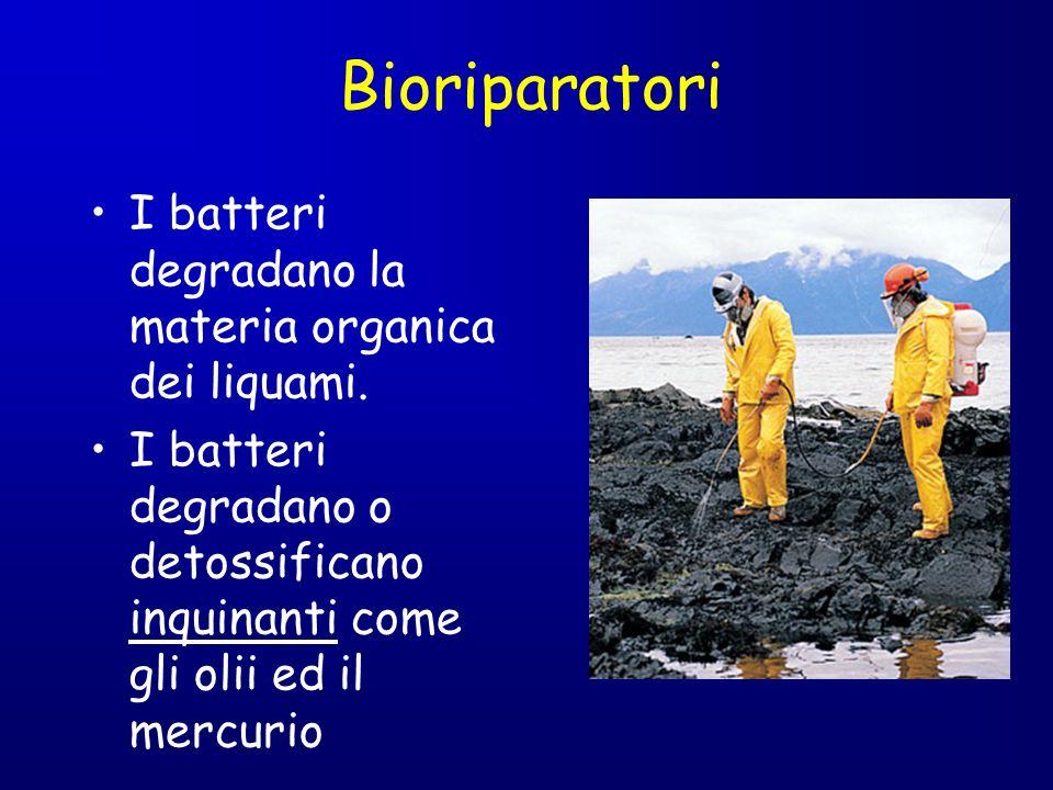 Bioriparatori I batteri degradano la materia organica dei liquami.