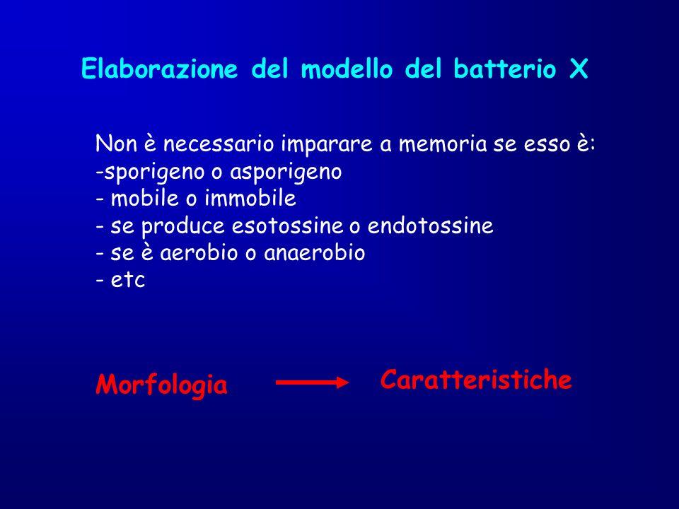 Elaborazione del modello del batterio X