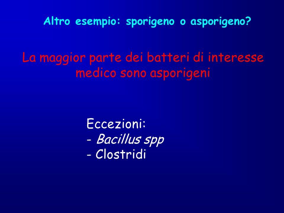 La maggior parte dei batteri di interesse medico sono asporigeni