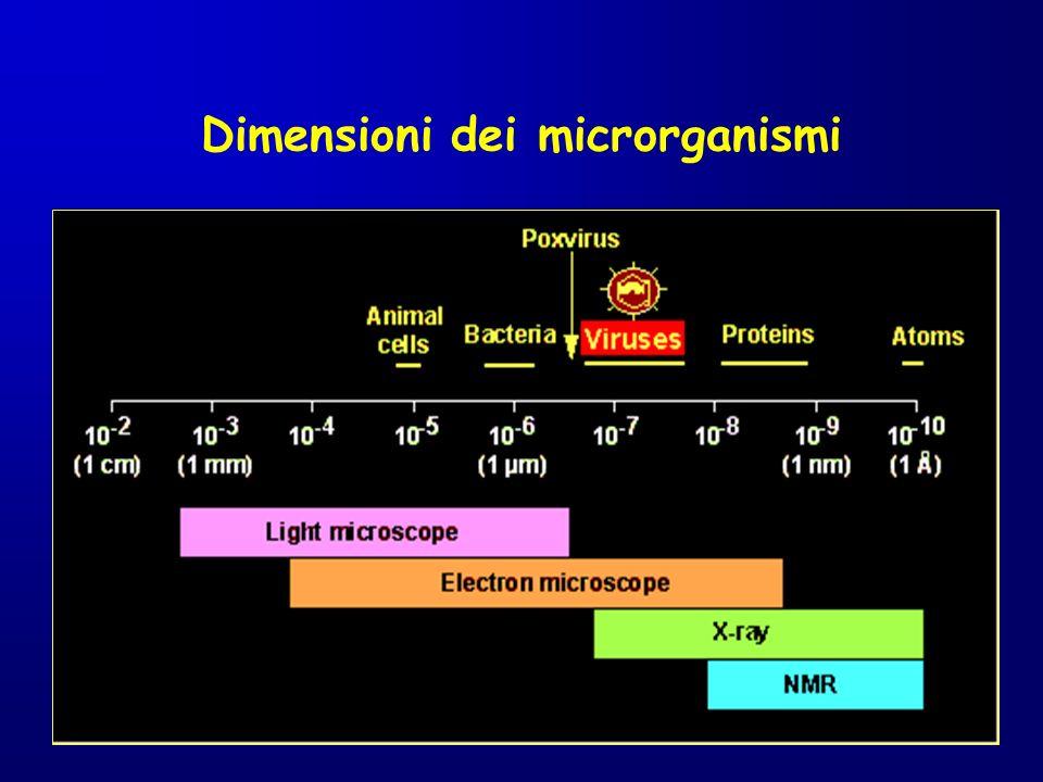 Dimensioni dei microrganismi