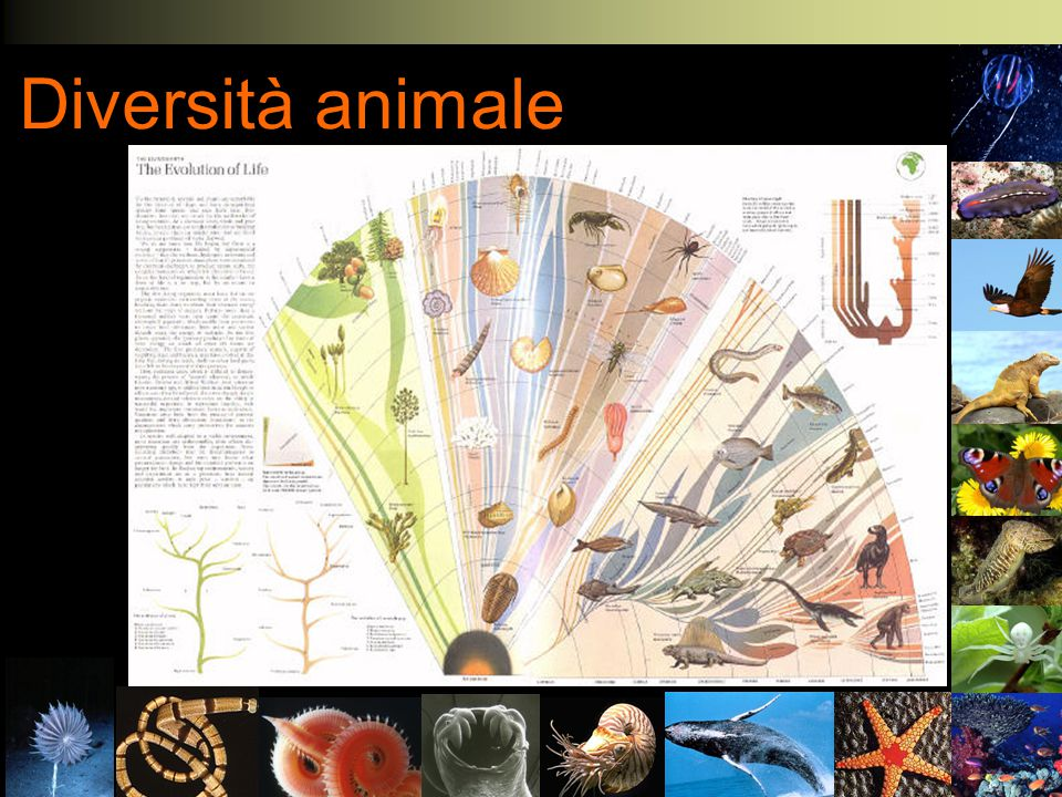 Biologia Evoluzionistica