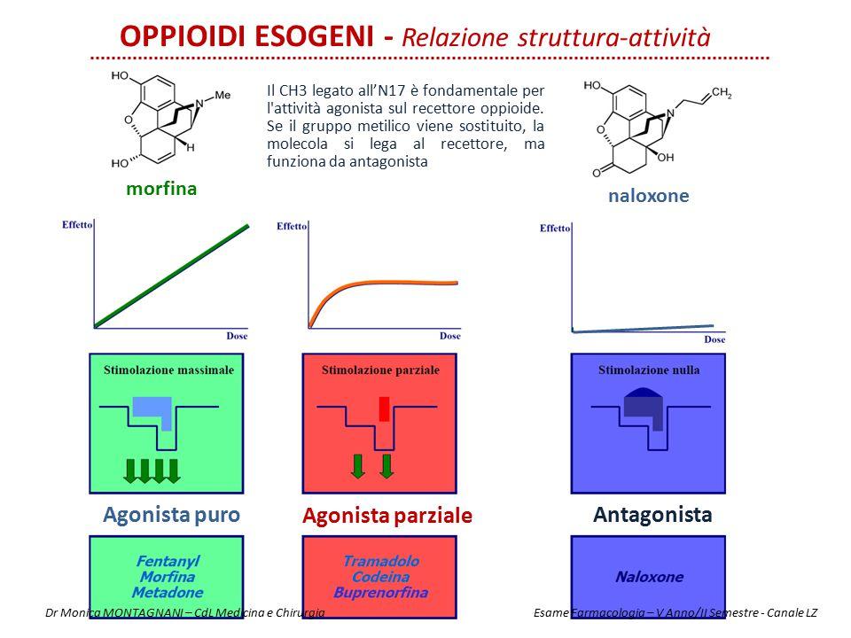 OPPIOIDI ESOGENI - Relazione struttura-attività