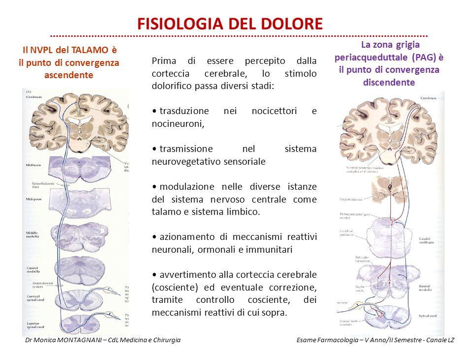 Fisiologia del dolore La zona grigia periacqueduttale (PAG) è