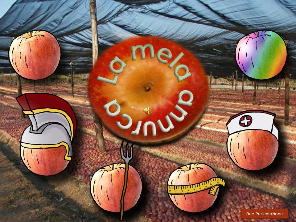 La mela annurca Fine Presentazione