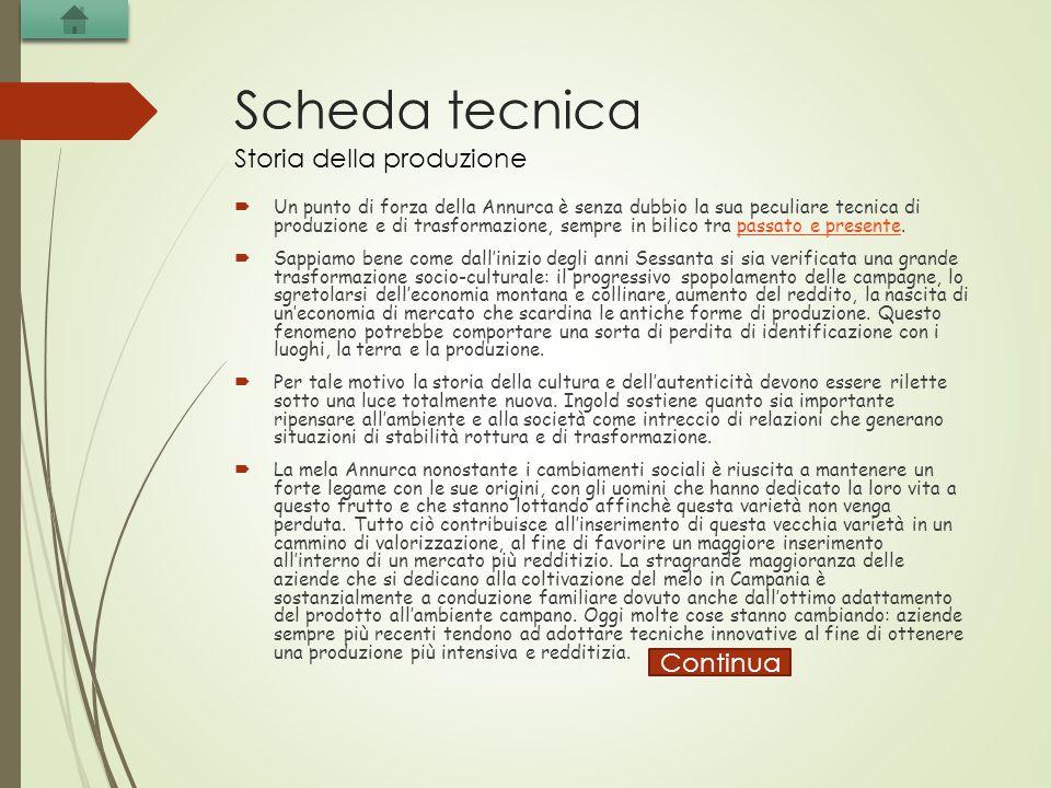 Scheda tecnica Storia della produzione Continua