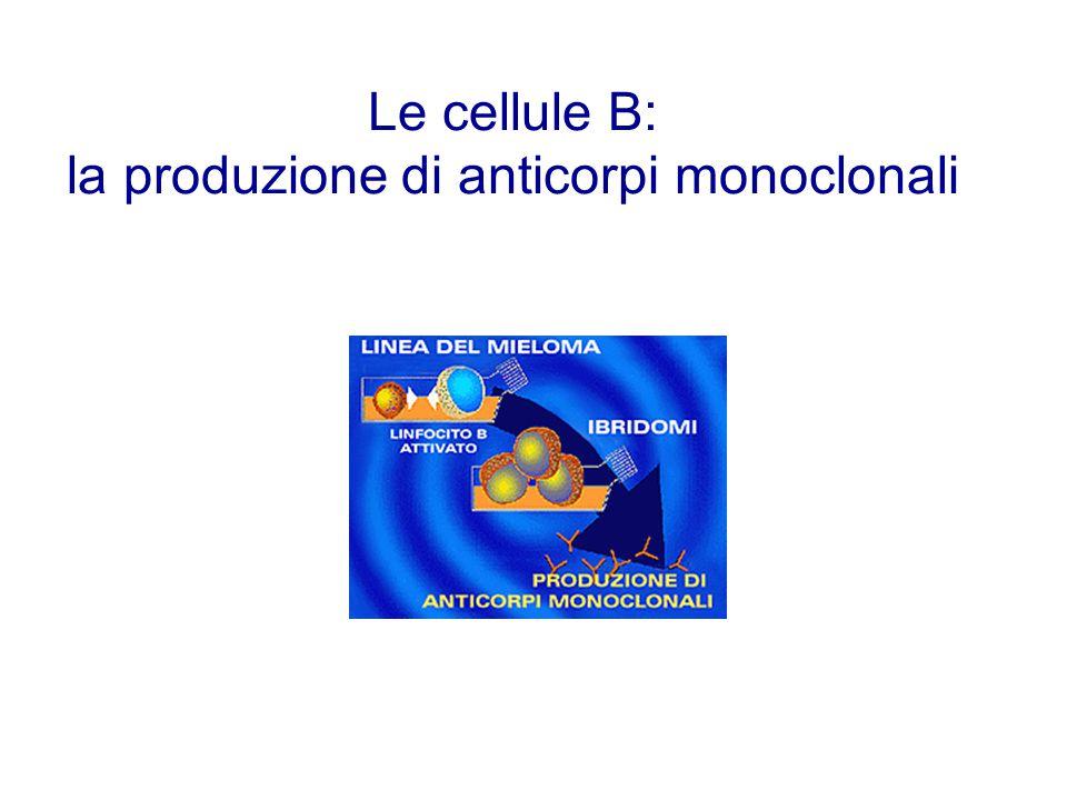 la produzione di anticorpi monoclonali