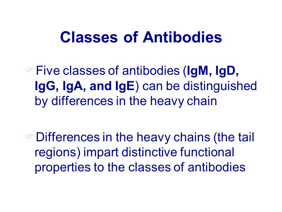 Classes of Antibodies Five classes of antibodies (IgM, IgD, IgG, IgA, and IgE) can be distinguished by differences in the heavy chain.