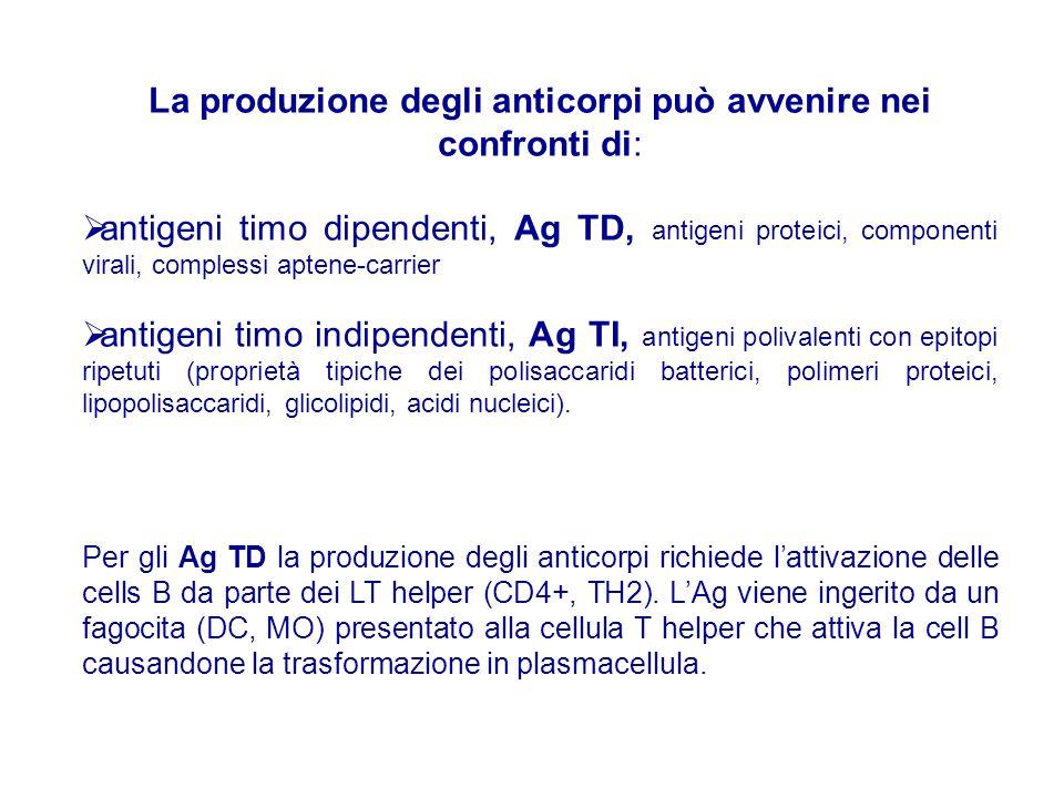 La produzione degli anticorpi può avvenire nei confronti di: