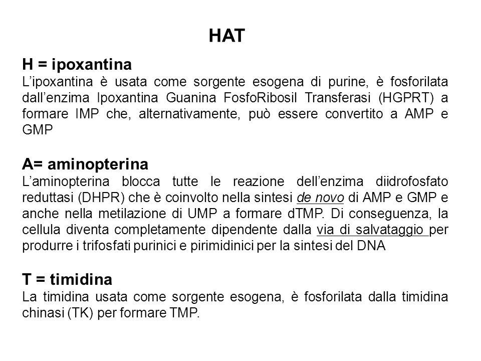 HAT H = ipoxantina A= aminopterina T = timidina