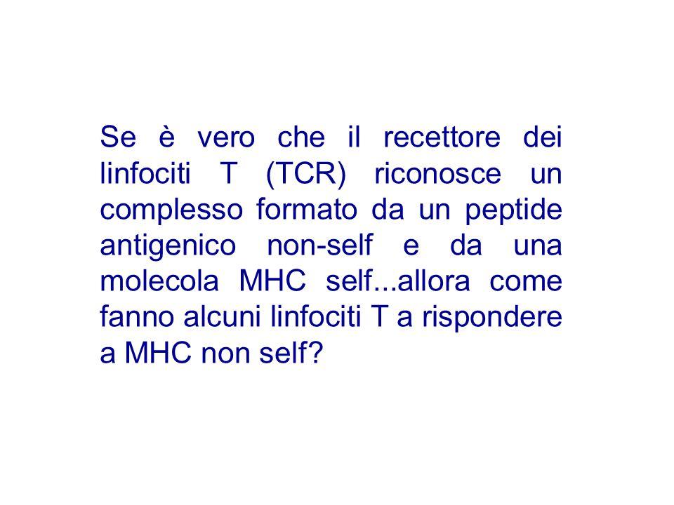 Se è vero che il recettore dei linfociti T (TCR) riconosce un complesso formato da un peptide antigenico non-self e da una molecola MHC self...allora come fanno alcuni linfociti T a rispondere a MHC non self