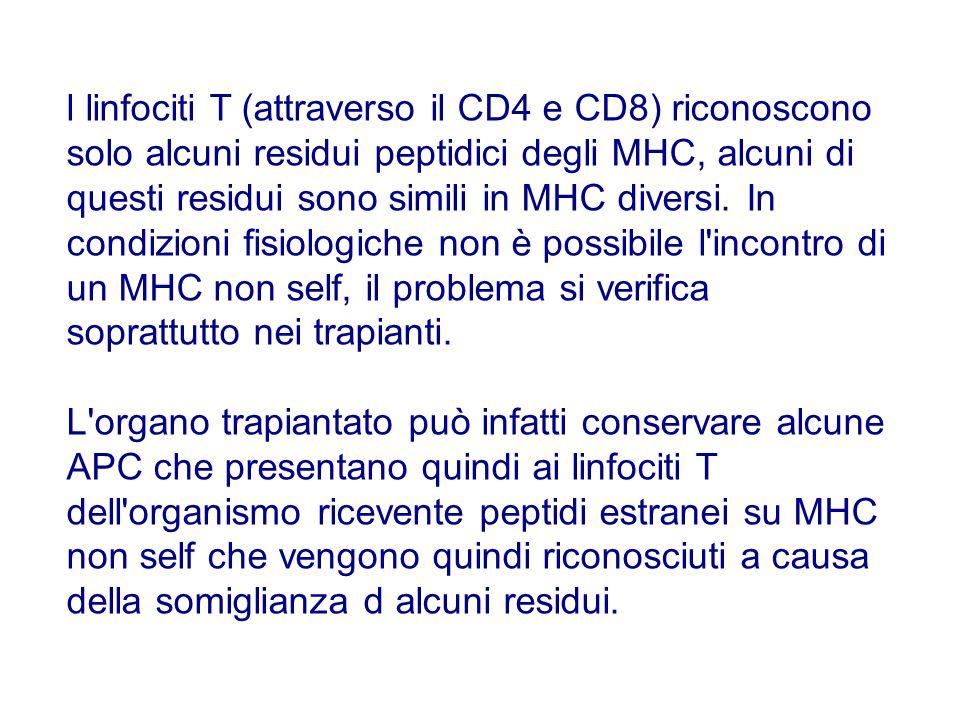 l linfociti T (attraverso il CD4 e CD8) riconoscono solo alcuni residui peptidici degli MHC, alcuni di questi residui sono simili in MHC diversi. In condizioni fisiologiche non è possibile l incontro di un MHC non self, il problema si verifica soprattutto nei trapianti.