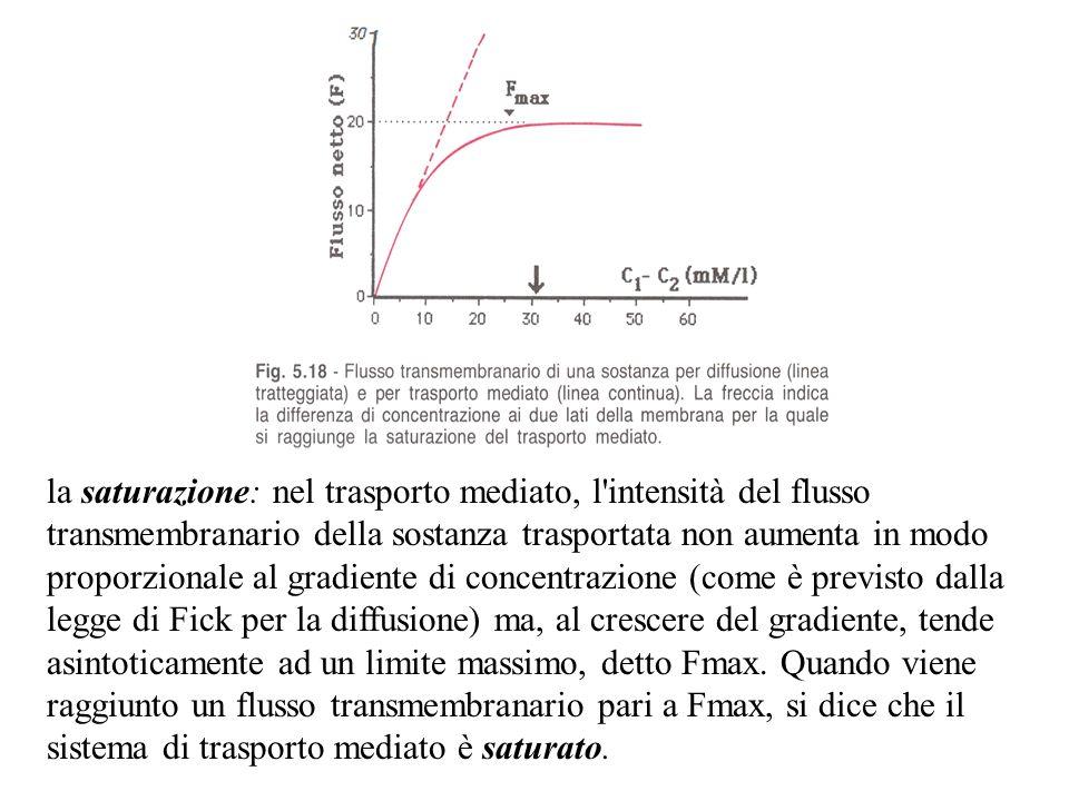 la saturazione: nel trasporto mediato, l intensità del flusso transmembranario della sostanza trasportata non aumenta in modo proporzionale al gradiente di concentrazione (come è previsto dalla legge di Fick per la diffusione) ma, al crescere del gradiente, tende asintoticamente ad un limite massimo, detto Fmax.