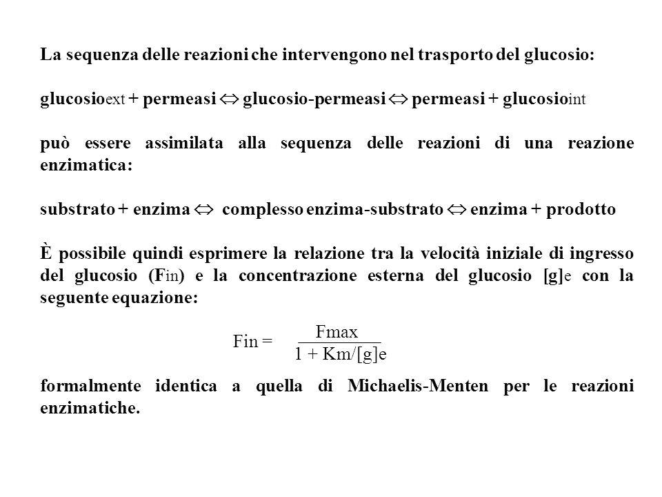 La sequenza delle reazioni che intervengono nel trasporto del glucosio: