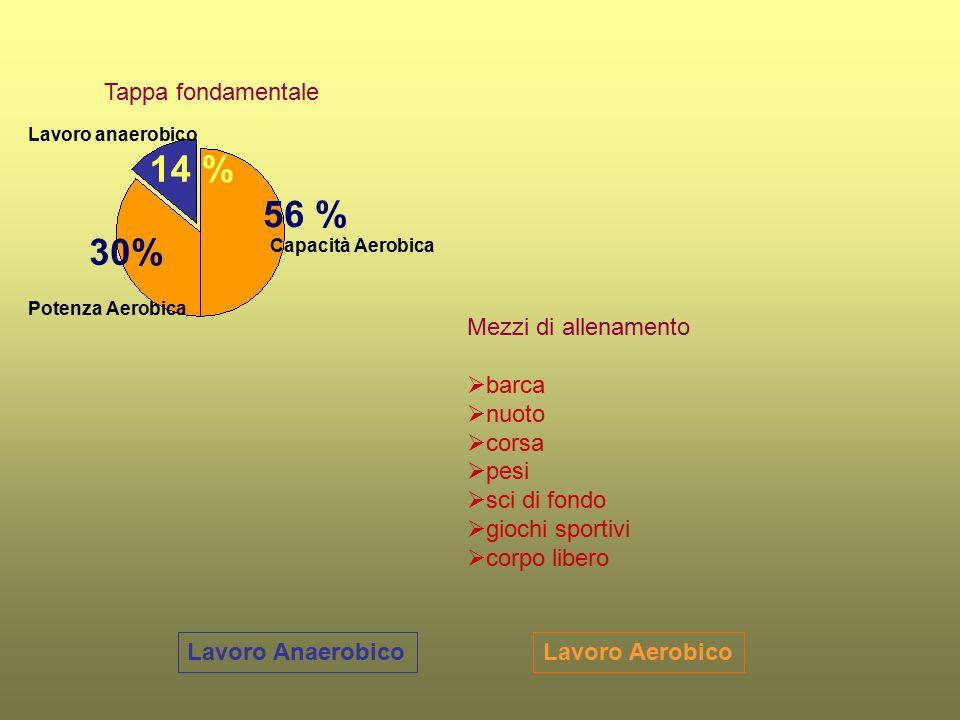 14 % 56 % 30% Tappa fondamentale Mezzi di allenamento barca nuoto