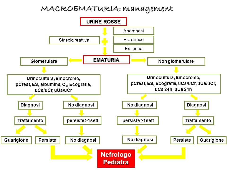 MACROEMATURIA: management
