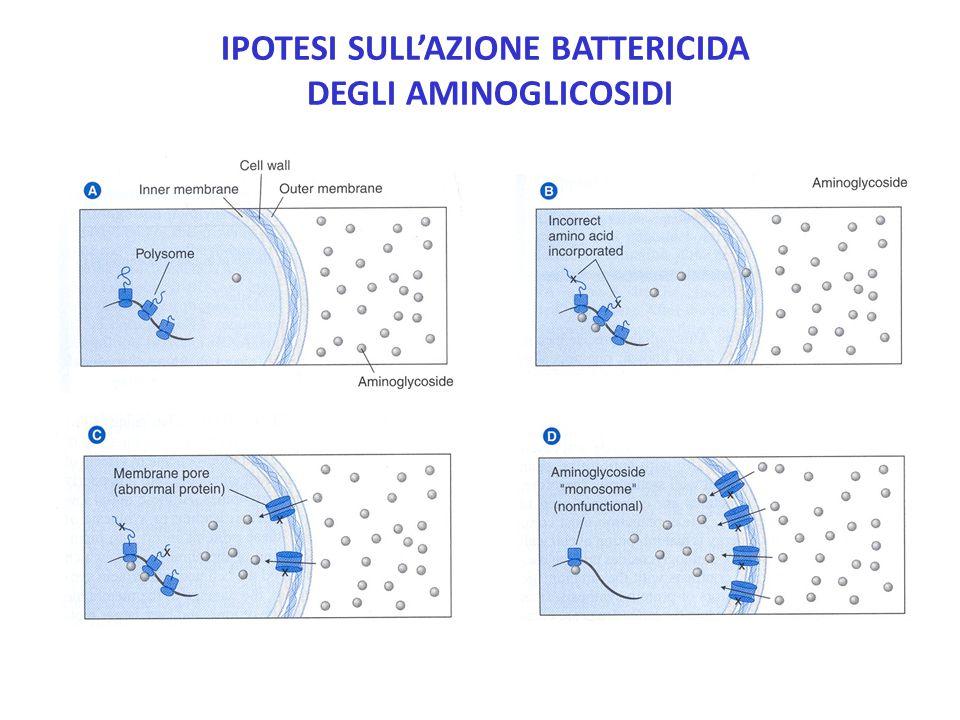 Ipotesi sull'azione battericida