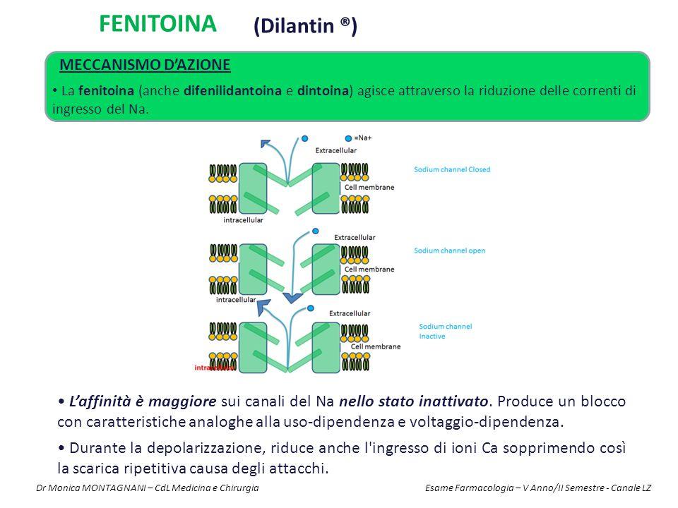 FENITOINA (Dilantin ®) MECCANISMO D'AZIONE