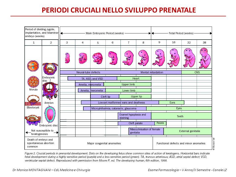 Periodi Cruciali nello Sviluppo Prenatale