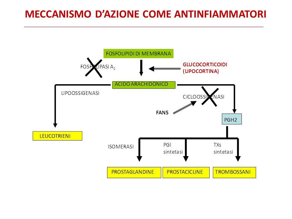 MECCANISMO D'AZIONE COME ANTINFIAMMATORI