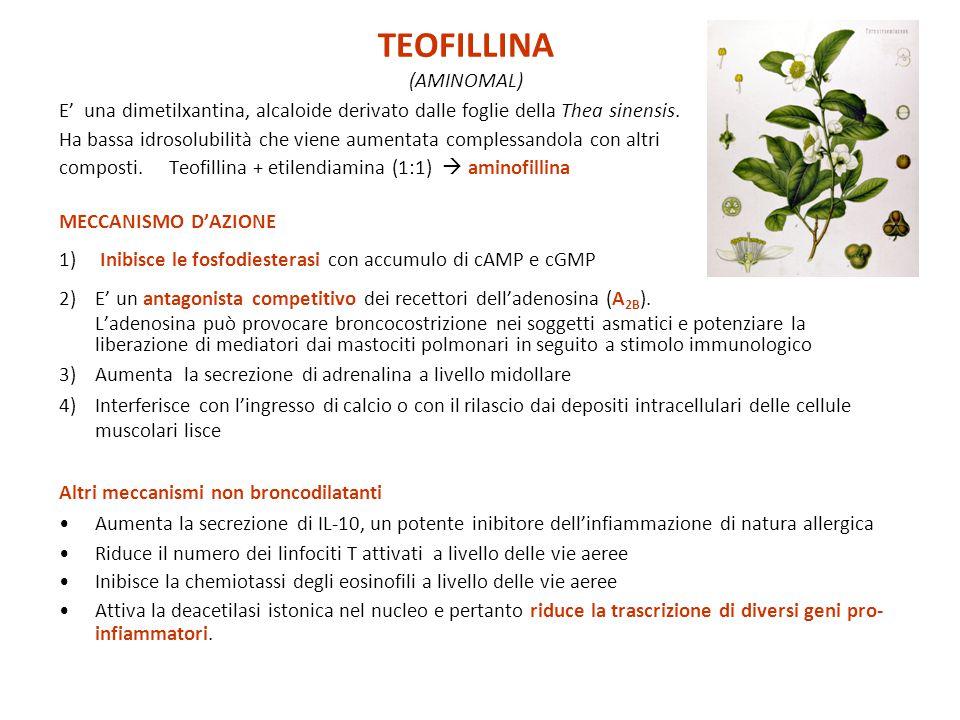 TEOFILLINA (AMINOMAL)