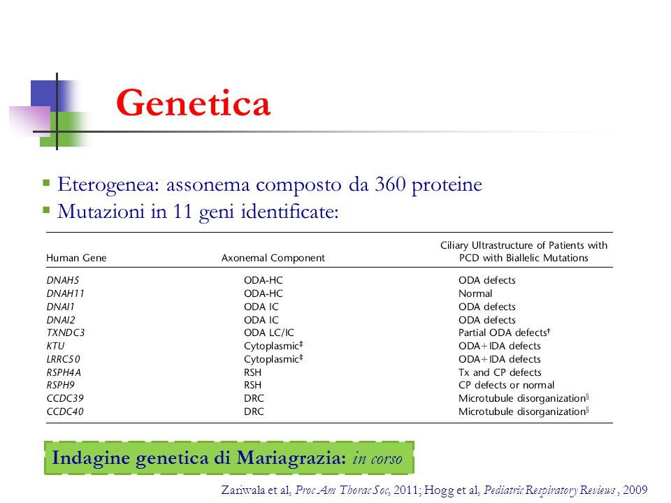 Genetica Eterogenea: assonema composto da 360 proteine