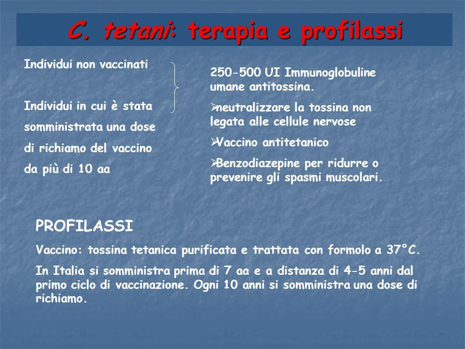 C. tetani: terapia e profilassi