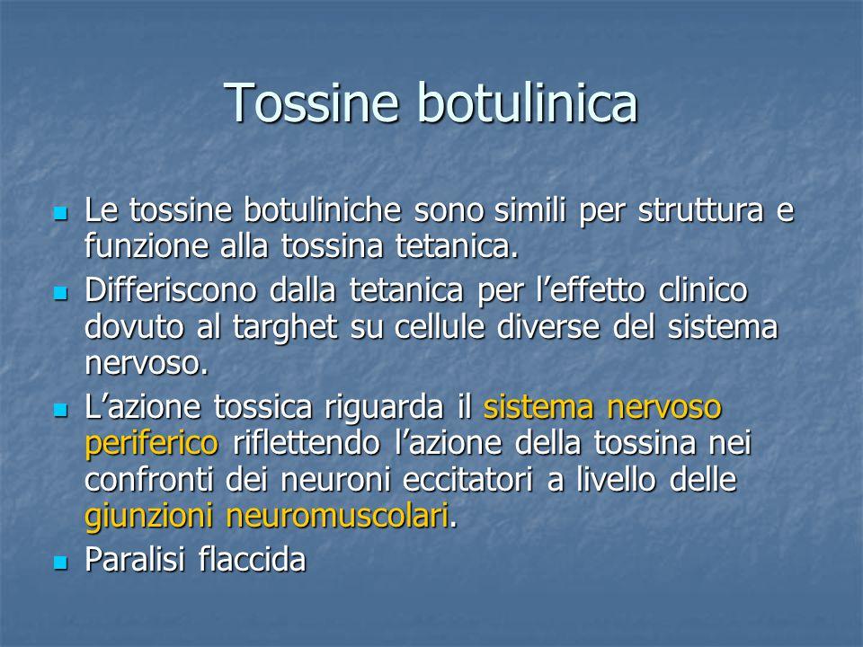 Tossine botulinica Le tossine botuliniche sono simili per struttura e funzione alla tossina tetanica.