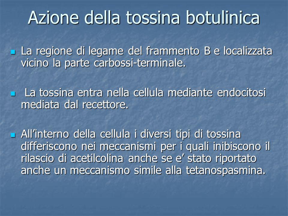 Azione della tossina botulinica