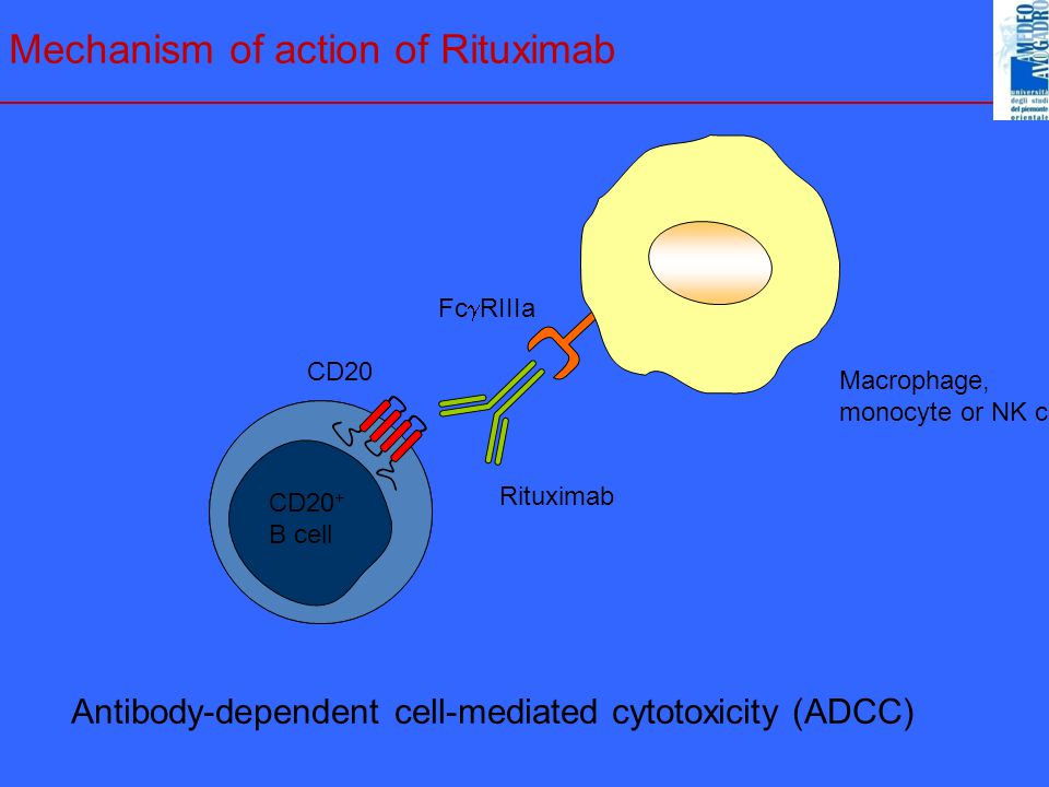 Mechanism of action of Rituximab